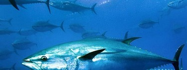 Nuevo escándalo alimentario: Europa investiga a España por vender atún adulterado