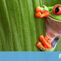 Costa Rica se ha convertido en el país más feliz del mundo. Estos son los secretos de su éxito