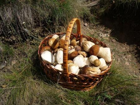 Los funghi porcini y sus usos en la cocina