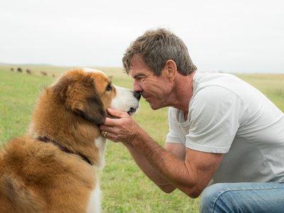 Cancelada la premiere de 'A Dog's Purpose' por el escándalo de maltrato animal durante el rodaje
