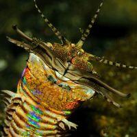 Bobbit, el siniestro gusano de hasta tres metros de longitud que se traga a sus presas bajo la arena