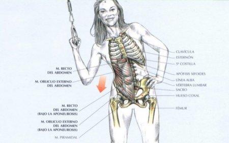 Guia de ejercicios abdominales (XII): Oblicuos en polea alta