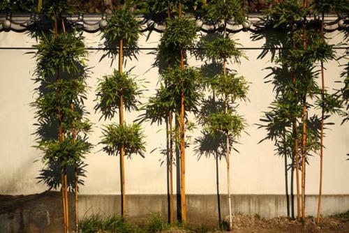 10 plantas que ayudan a purificar el aire for Como purificar el aire contaminado