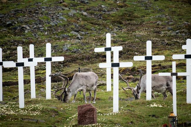 Ciervos Cementerio