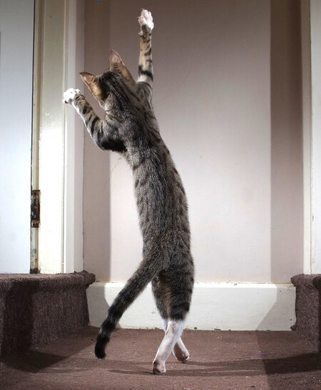 Iain Mcconnell The Dancing Cat
