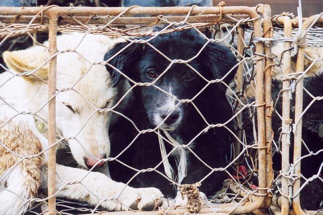 Perros en venta para su consumo como carne