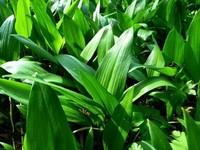 Las plantas ¿seres inanimados o detectores de parámetros físicos y químicos?
