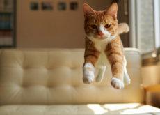 ¿Por qué los gatos caen siempre de pie?