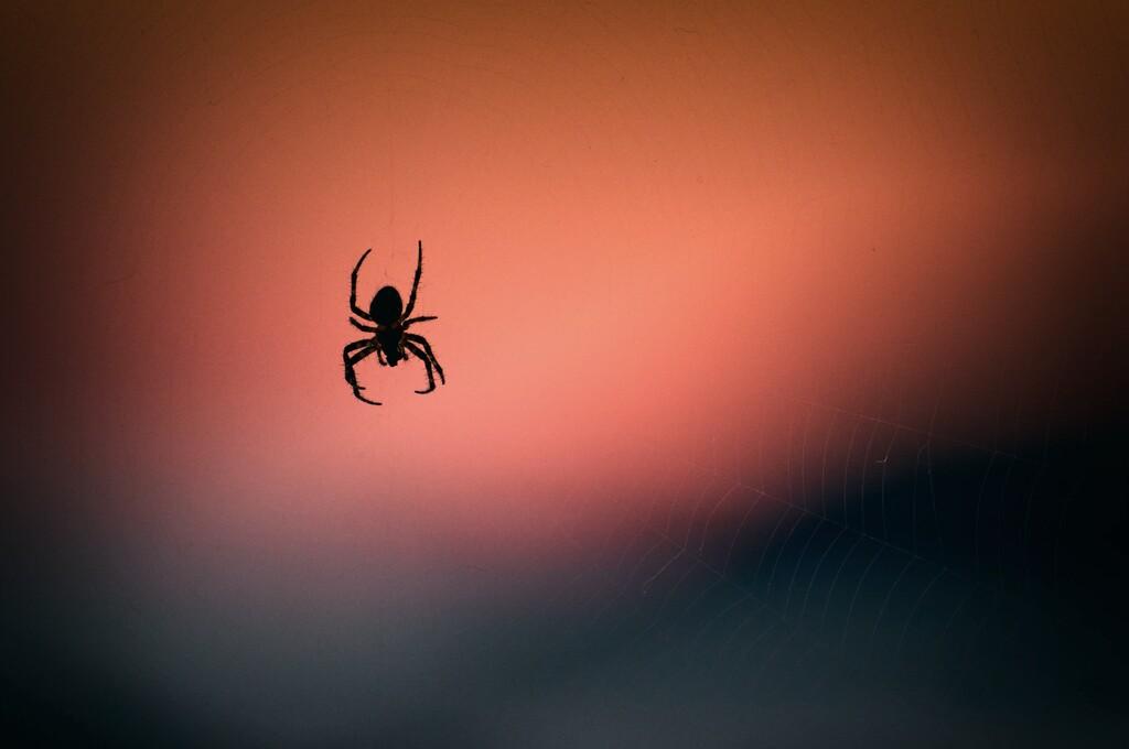 Cuando las arañas se guiaron por la luz para construir sus telarañas en el espacio ante la falta de gravedad