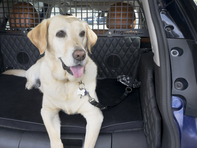 Nissan Rogue Dogue, un SUV Pet-Friendly para esos paseos inolvidables con tu mascota