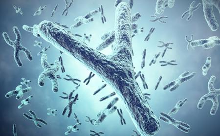 El cromosoma Y está desapareciendo... ¿Qué va a ser de los hombres?