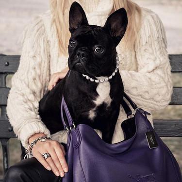 Las mascotas de Lady Gaga, Marc Jacobs y Lagerfeld coparán la escena durante el mes de julio