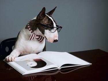 Con ustedes, Neville Jacobs (o cómo ser un perro no impide ser protagonista de un libro)