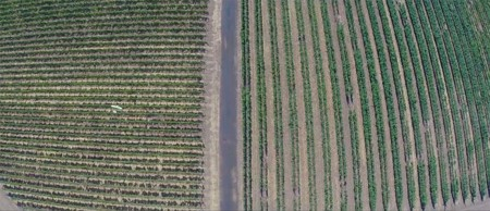 Drone Agricultura