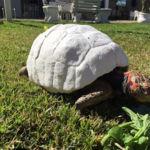 Así es como el primer caparazón impreso en 3D le ha salvado la vida a esta tortuga