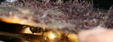 Singularidades extraordinarias de animales ordinarios (XXXVII): la ostra perlera