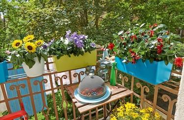 Cascadino y Balconera llenarán jardines y terrazas de colores alegres este verano