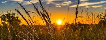 La mayor fuente de azufre para el medioambiente ya no son las centrales eléctricas de carbón sino la agricultura