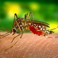 COVIDengue: cinco personas contrajeron dengue y COVID al mismo tiempo en México, esto pasa cuando virus imparables se encuentran