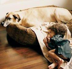 Los perros protegen a los niños de las alergias
