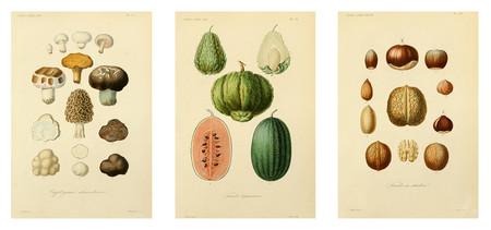 Triptico Ilustraciones Antiguas Botanica Para Decorar