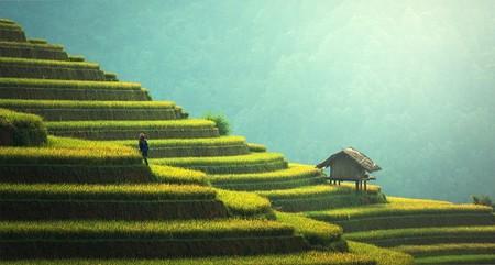 Cómo la agricultura hizo que nos volviéramos más bajitos de lo que éramos