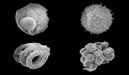 Posiblemente estos sean los primeros animales de la historia