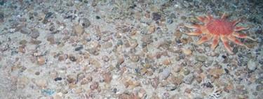 Esta nueva especie de gusano encontrada en Escocia tiene ojos cerca de su boca y también cerca de su ano