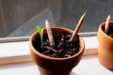 Lápices que al plantarlos crecen en hierbas para la cocina