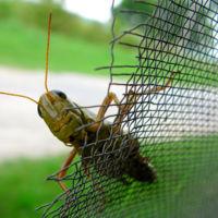 Una docena de especies de insectos viven en tu casa (sin que lo sepas)