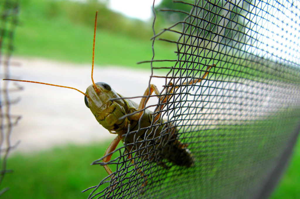 Una docena de especies de insectos viven en tu casa sin - Bichos en casa por humedad ...