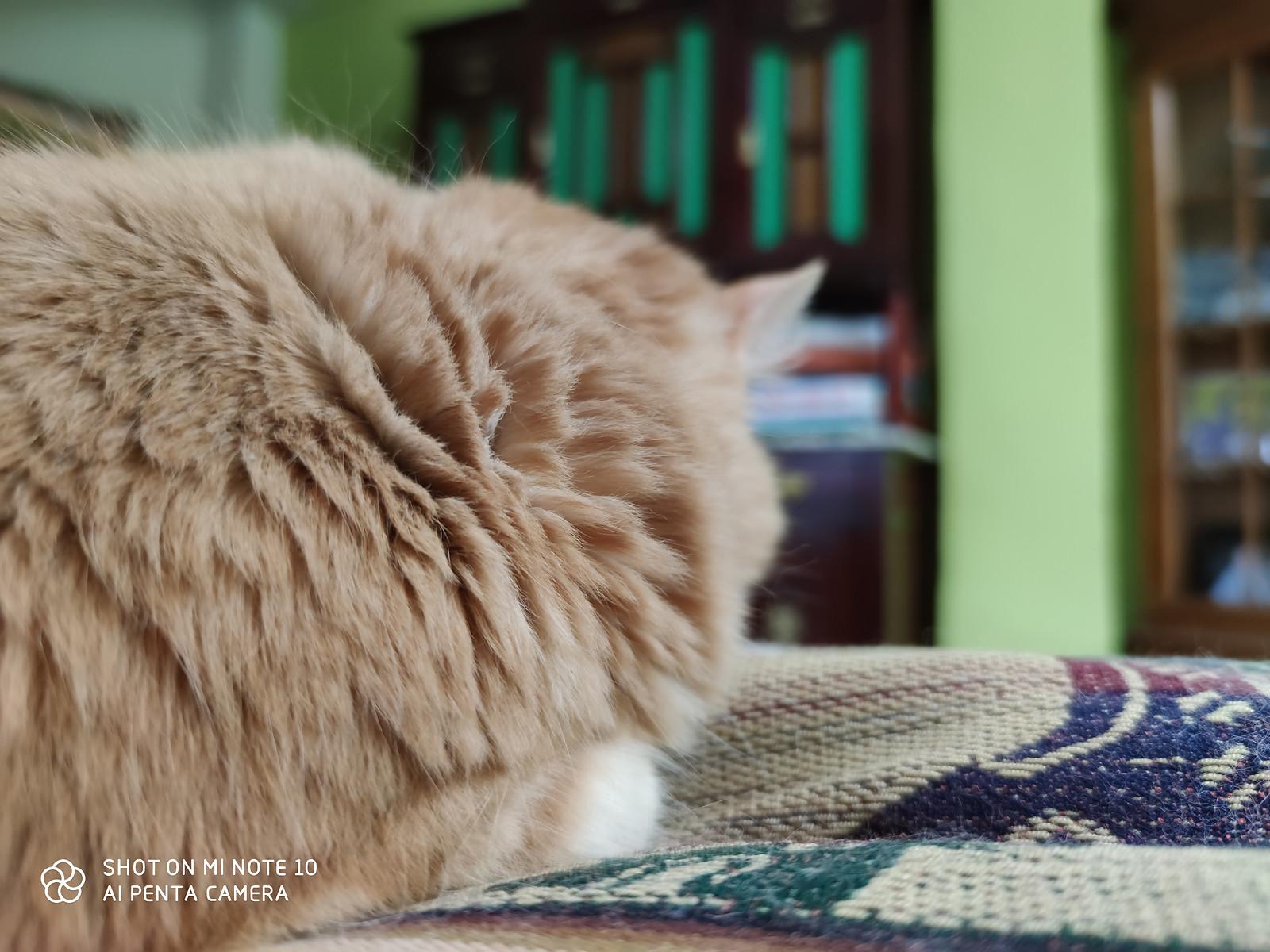 Foto de Xiaomi Mi Note 10 (10/44)