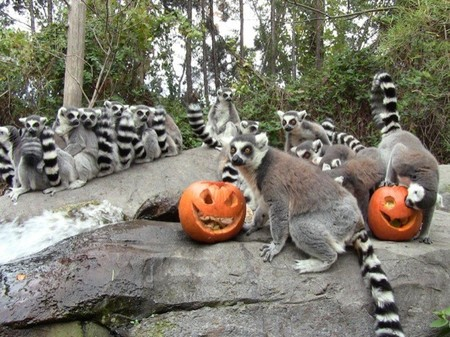 Una gran fiesta de Halloween marca el inicio del curso 2013 en Faunia