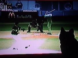 Los gatos no distinguen la HDTV de la realidad
