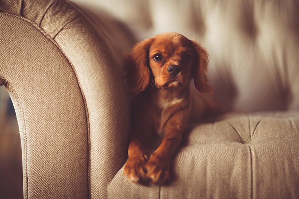 Como Fotografiar Mascotas I Perros 13