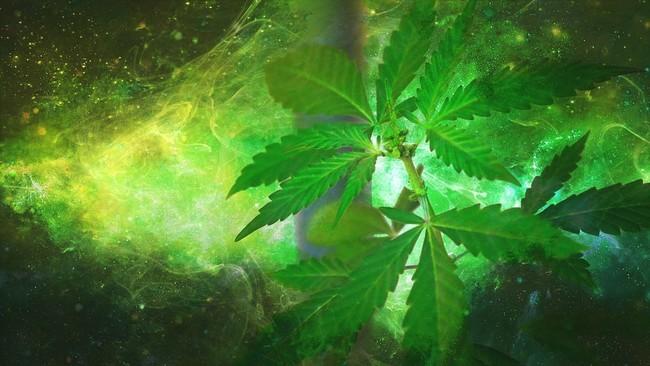 Marijuana 1910598 960 720