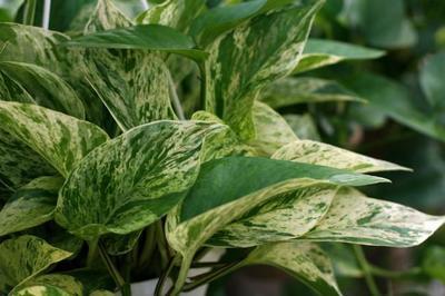 Las once mejores plantas de interior