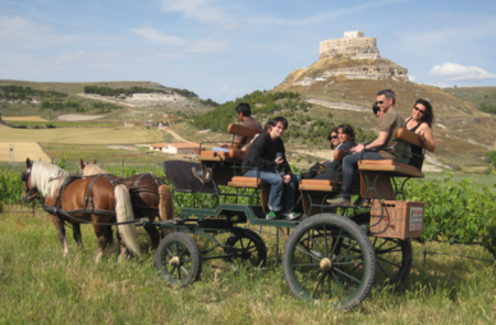 34 Museos del Vino en España, para el Día Europeo del Enoturismo
