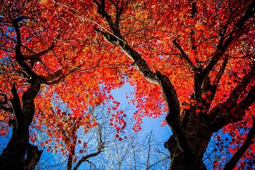 Ocho trucos y consejos para obtener mejores fotografías de árboles