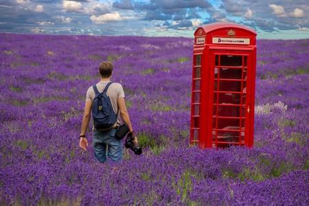 Los Romanticos Campos De Lavanda De Mayfield Lavender Farm