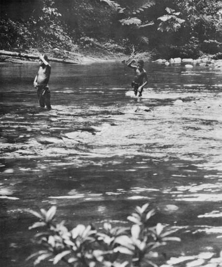 Ason River Umbi