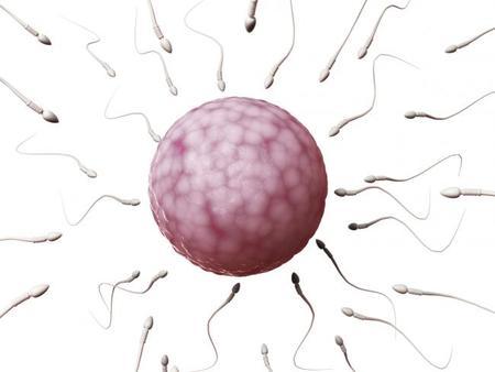 fecundación al óvulo