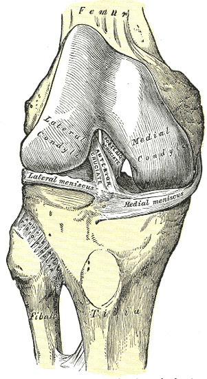 huesos rodilla