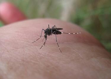 Cuidado con los insectos, transmiten enfermedades