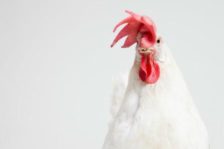 Crisis de gripe aviar en Estados Unidos: la epidemia pone en peligro la producción de huevos y afecta a otros sectores