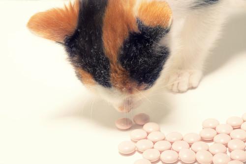 Así actúa el efecto placebo en niños y animales