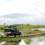 Safari fotográfico en el Parque Nacional Bundala de Sri Lanka