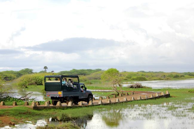 Bundala Park Sri