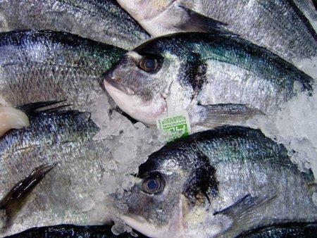 El colesterol de los pescados