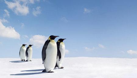 En bus a la Antártida